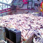 Exportaciones pesqueras generaron US$1.300 millones