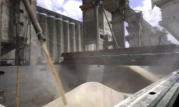 Los embarques de granos, subproductos y aceites cayeron en 2020