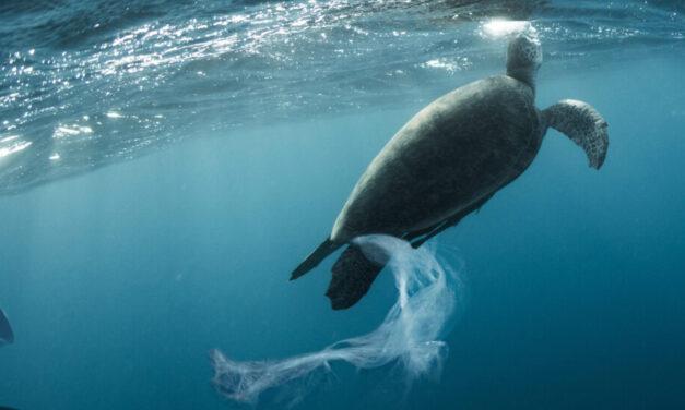 La iniciativa mundial sobre turismo y plásticos da la bienvenida a 25 nuevos signatarios