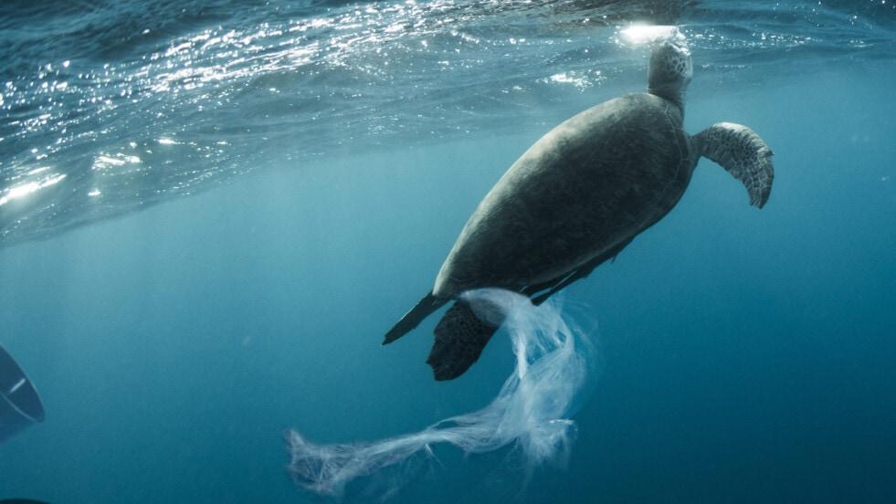 Argentina integra una iniciativa mundial para acabar con la basura marina