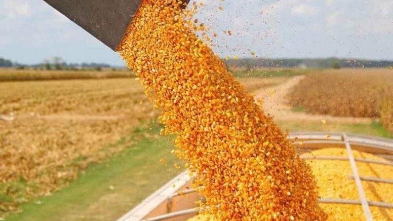 China se convertirá en el primer importador mundial de maíz