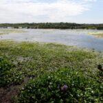 Proteger y vigilar los humedales, esa es la cuestión en el Delta del Paraná