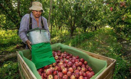 La exportación de peras y manzanas de Río Negro se amplió en el mercado latinoamericano