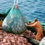 Provincia anuncia aumento del Fondo de Desarrollo Pesquero 2021