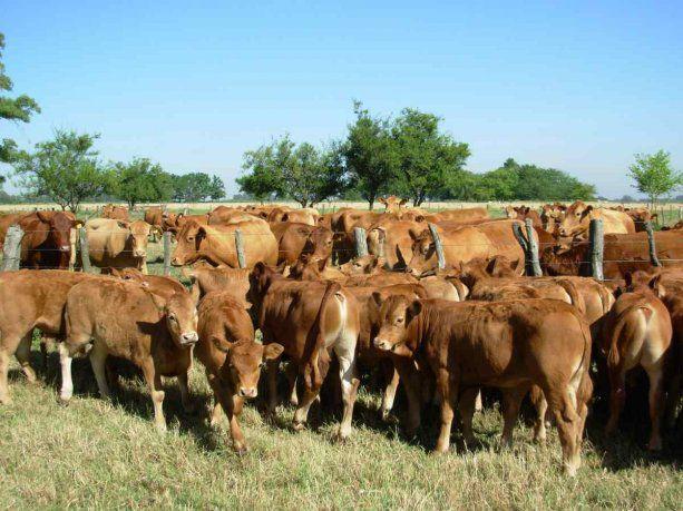 La Argentina logró la reapertura del mercado para exportar bovinos a Uruguay