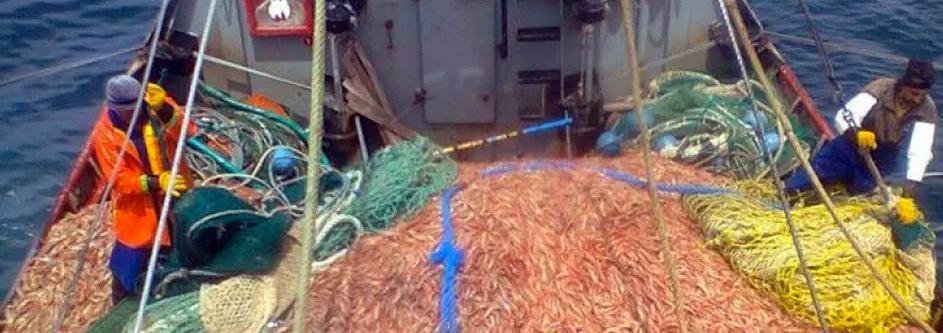 El sector pesquero celebra el acuerdo con Brasil para exportar langostinos