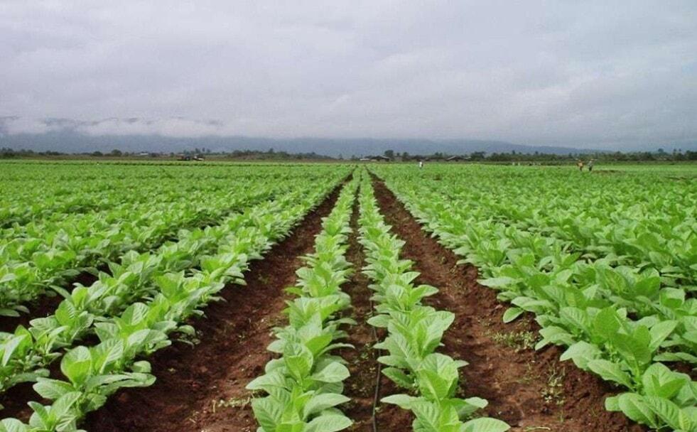 Agricultura destina cerca de 51 millones de pesos para asistir a los productores de Misiones
