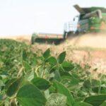 Argentina vuelve a ser este año el principal proveedor mundial de soja