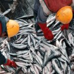 La pesca creció un 12,3 % el último año