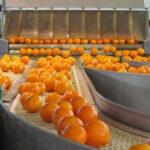 Argentina consiguió que Perú abra su mercado para los cítricos y nueces locales