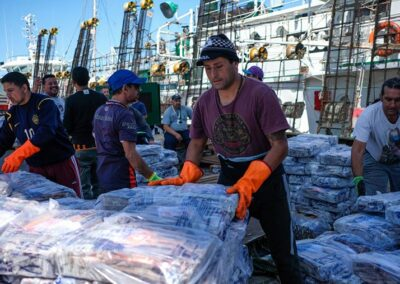 Pesca de Calamar supera las 110 mil toneladas, Mar del Plata lidera la descarga