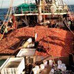 Chubut impone sanciones a quienes violan la Ley de Pesca