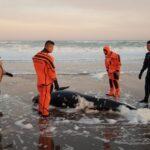 Prefectura ayudó a un cetáceo a regresar al mar