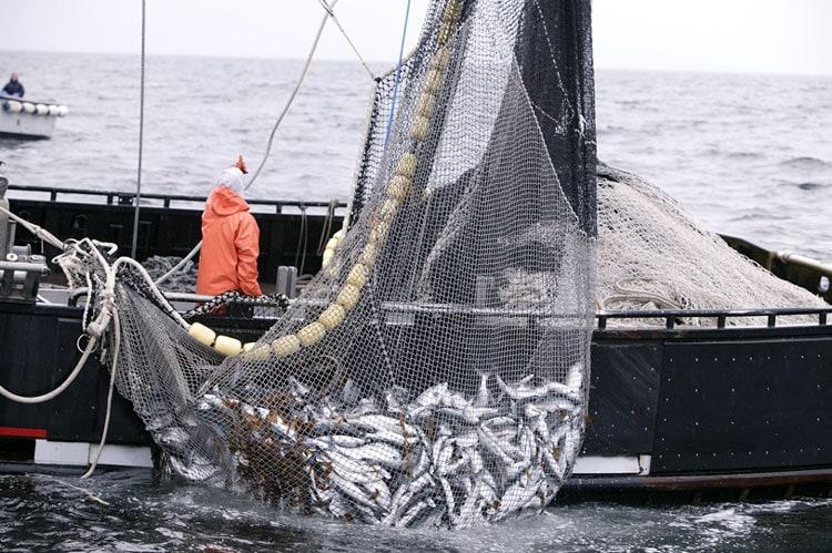 La pesca consolida su crecimiento interanual con un incremento de 59,2%