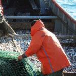 En 2020 la anchoíta volvió a ser patagónica