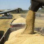 Cinco empresas se quedaron con casi el 60% de las exportaciones agroindustriales locales
