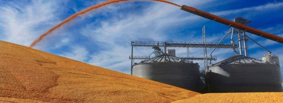 El maíz atravesado por demoras en la cosecha y la bajante del río