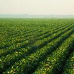 Nueva ficha técnica de la actividad yerbatera y del cultivo de té