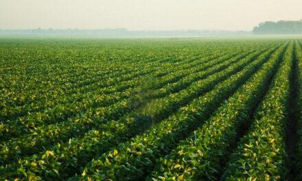 Misiones: la cadena productiva de té acordó para la próxima zafra incrementos del 50%