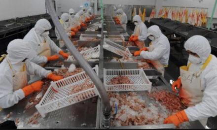 Establecimientos pesqueros argentinos fueron habilitados para exportar a Costa Rica