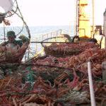 Inidep capacitan a asistentes de investigación sobre la pesquería de centolla