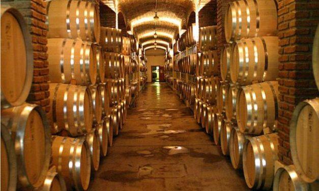 Frescura y sanidad de cosecha 2021 permitirá producción de excelentes vinos, coinciden especialistas