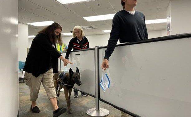 Cómo operan los perros que detectan Coronavirus en el aeropuerto de Miami