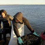 Chubut: Veda de captura de productos bivalvos en Riacho San José y Playa Bengoa