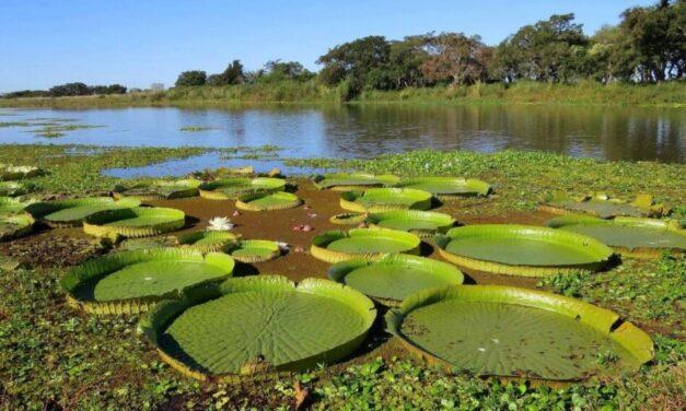Argentina, entre los 30 países clave para recuperar la biodiversidad del planeta